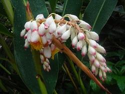 gettou flower 3.jpg